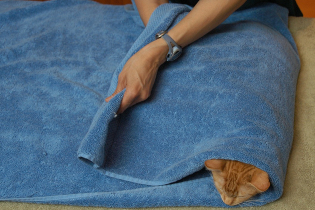 How to Wrap a Cat In A Towel Step 3